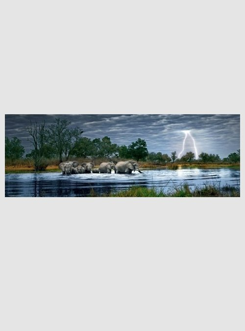 Alex Bernasconi: Ελέφαντες, 2000 τεμ.