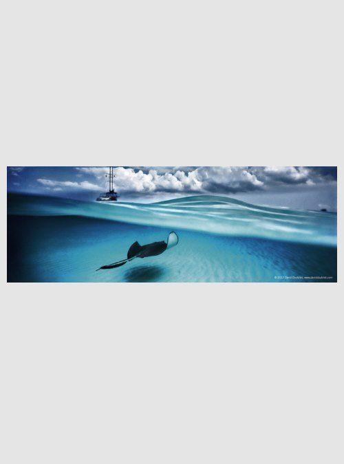 29531-humboldt-stingray-panorama-75pcs
