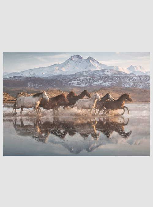 58376-horses-in-cappadocia-1000pcs