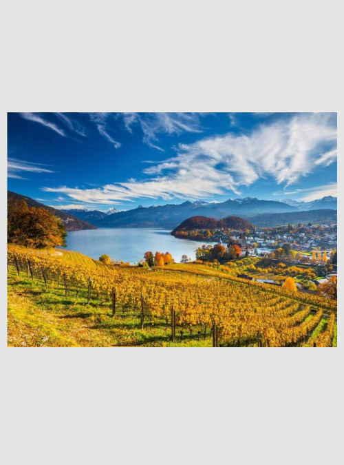 58953-vineyards-2000pcs