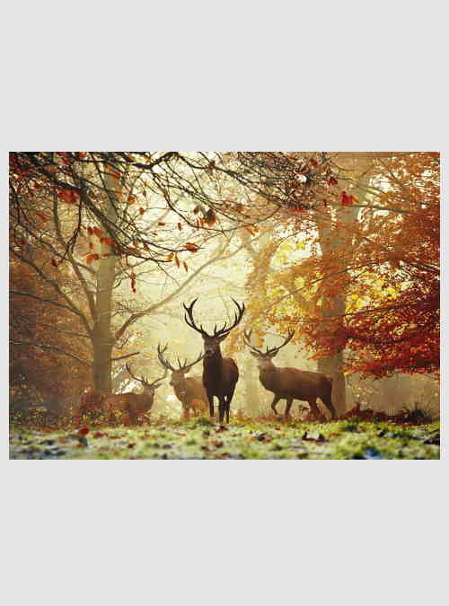 29805-Magic-Forests-Stags-1000pcs