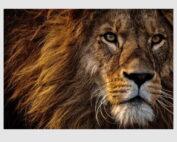 150951-lion-1000pcs